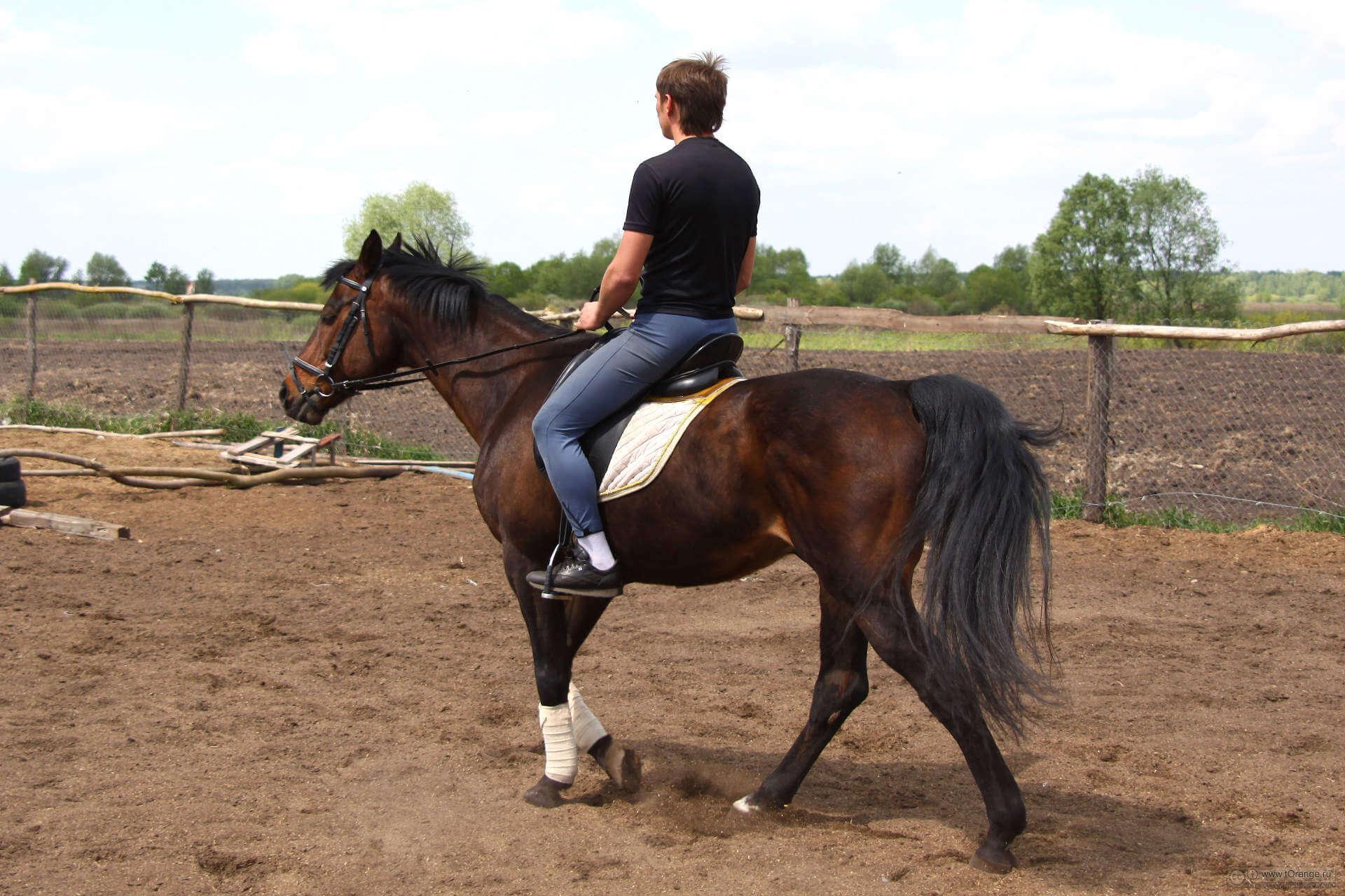 верховая езда при простатите
