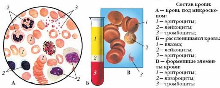 количество гемоглобина в крови у мужчин норма