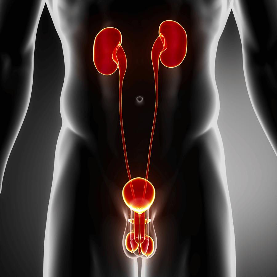 Народные средства для эффективного лечения предстательной железы