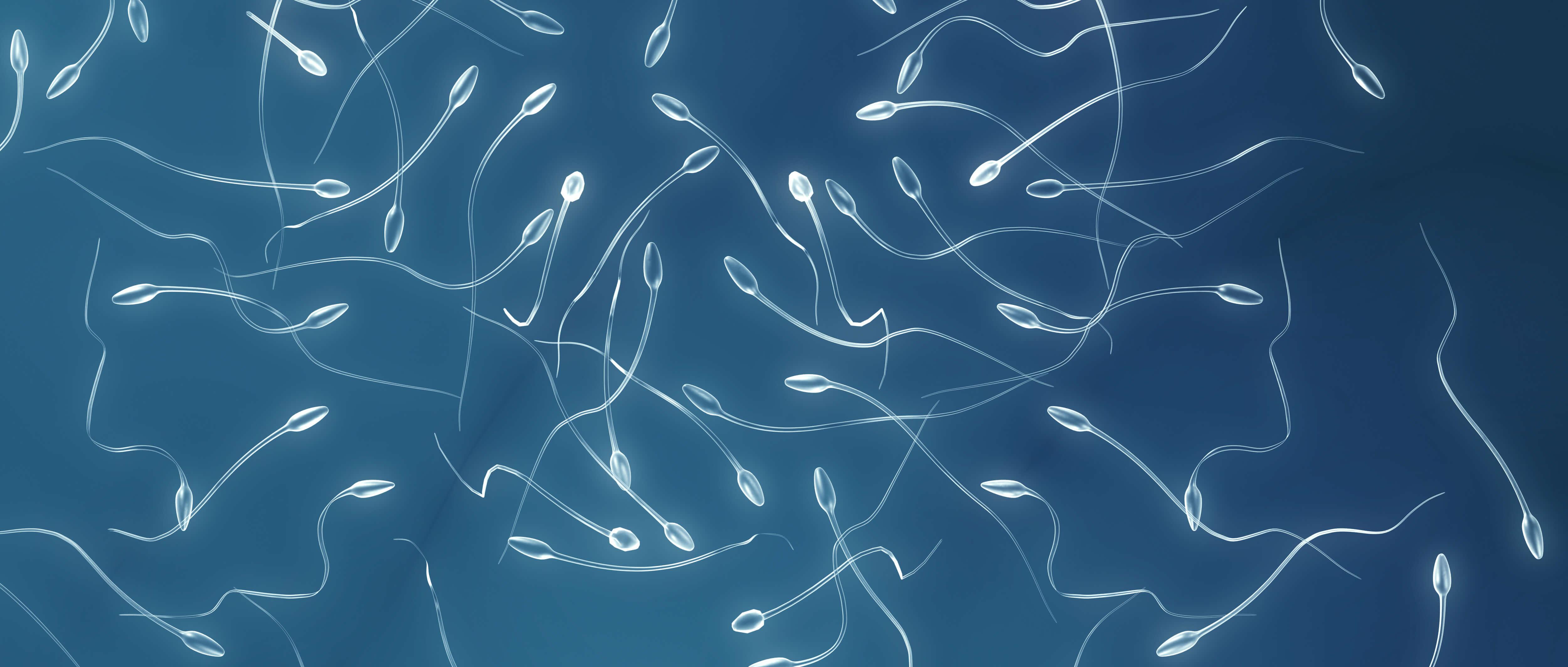 Секс при сдаче спермограммы 14 фотография
