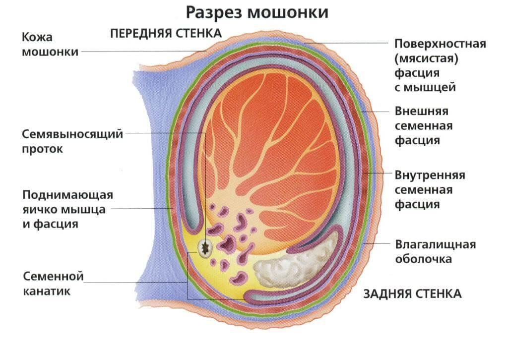 средний размер члена в россии Кудымкар