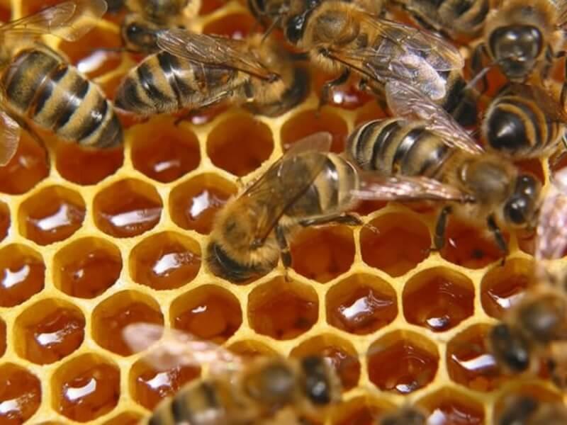 крем здоров от простатита состоит из продуктов пчеловодства