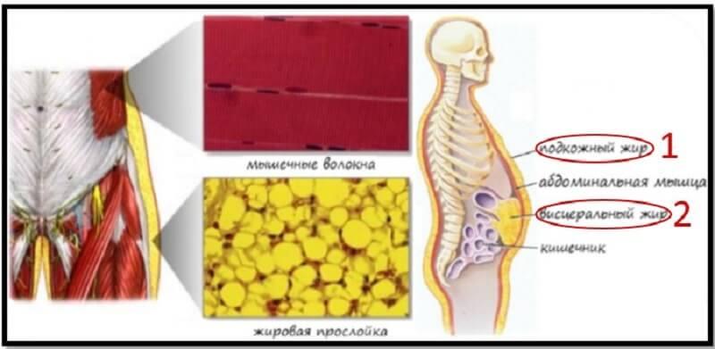 последствия ожирения по женскому типу у мужчин