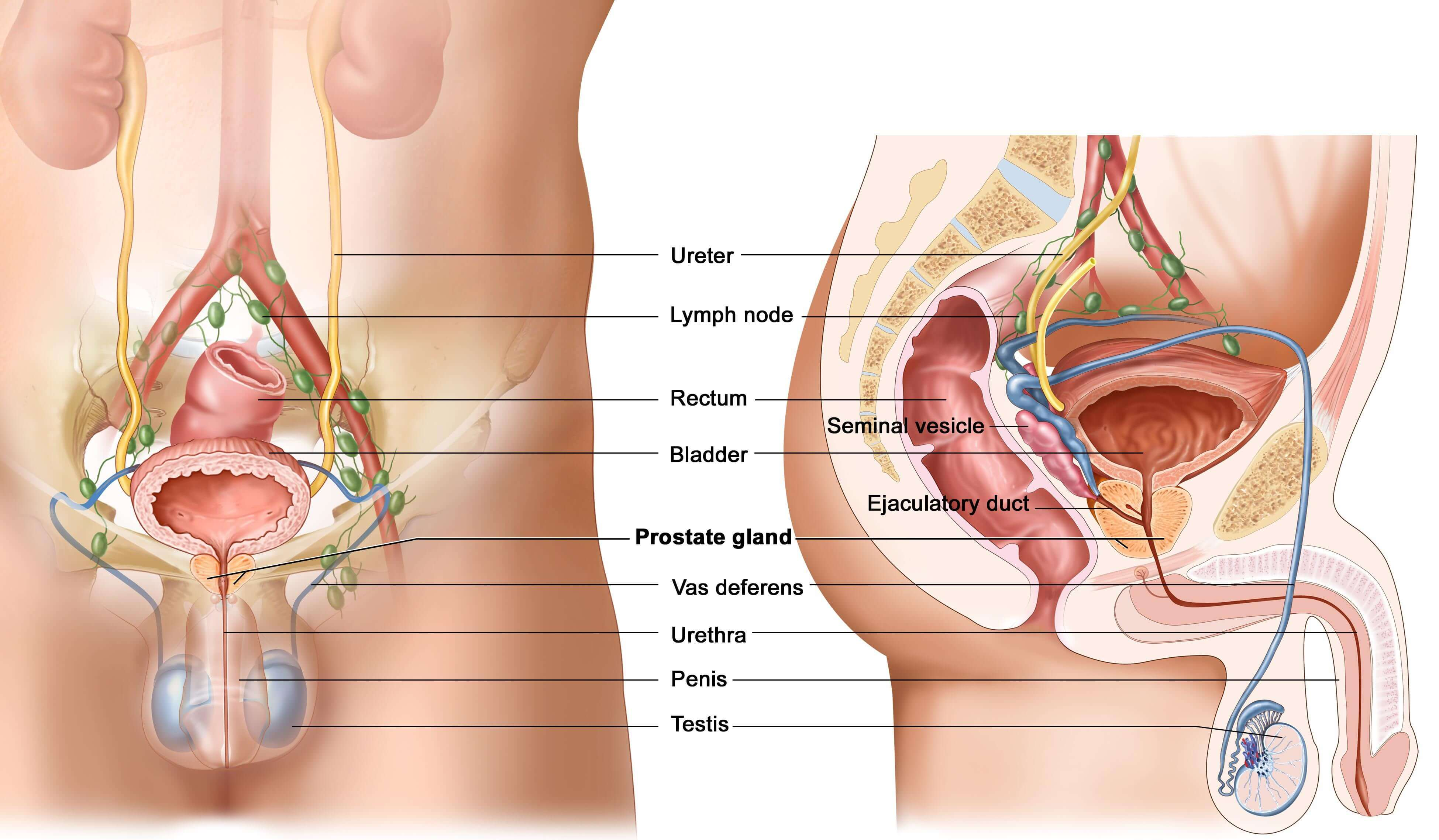Уреалпазма у мужчин: сиптомы и распространение