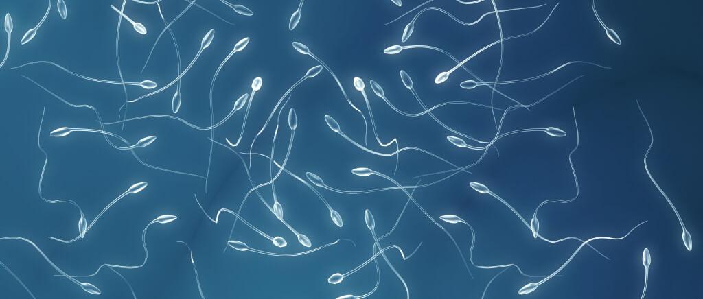 Какие правила сдачи спермограммы необходимо соблюдать
