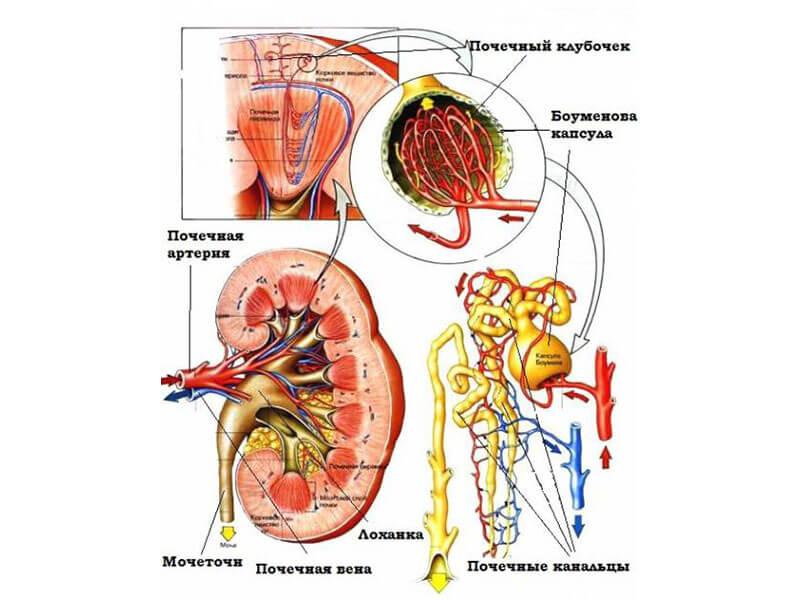 симптомы сопровождающие наличие крови в моче у мужчин