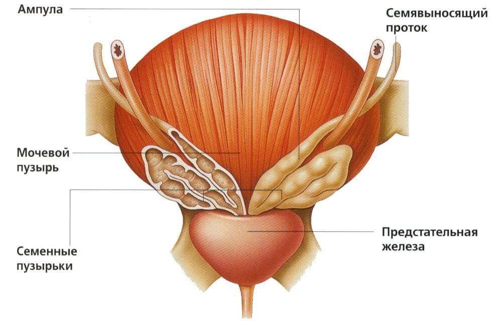 заболевания предстательной железы симптомы