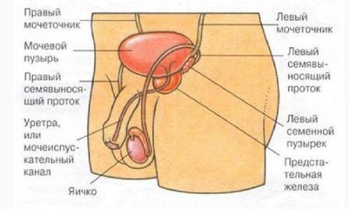 лечение простатита альфа-адреноблокаторами