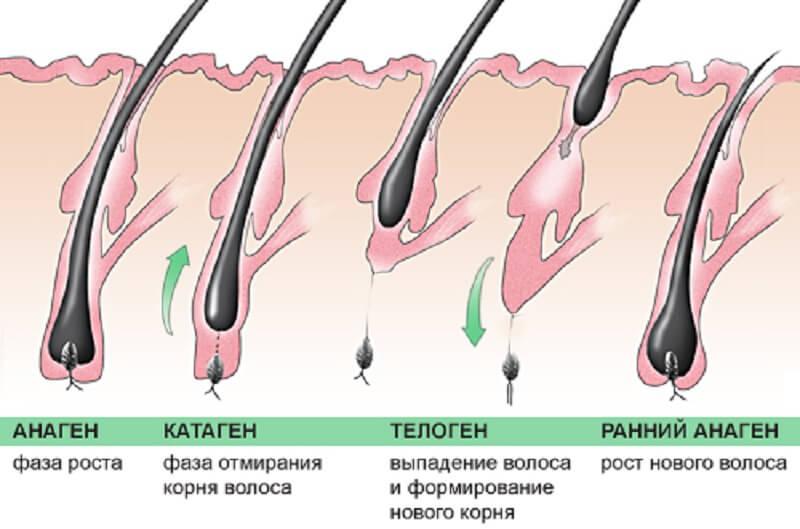 нарушение цикла роста при андрогенной алопеции у мужчин