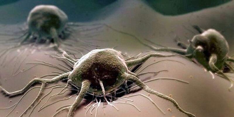 причины развития рака полового члена