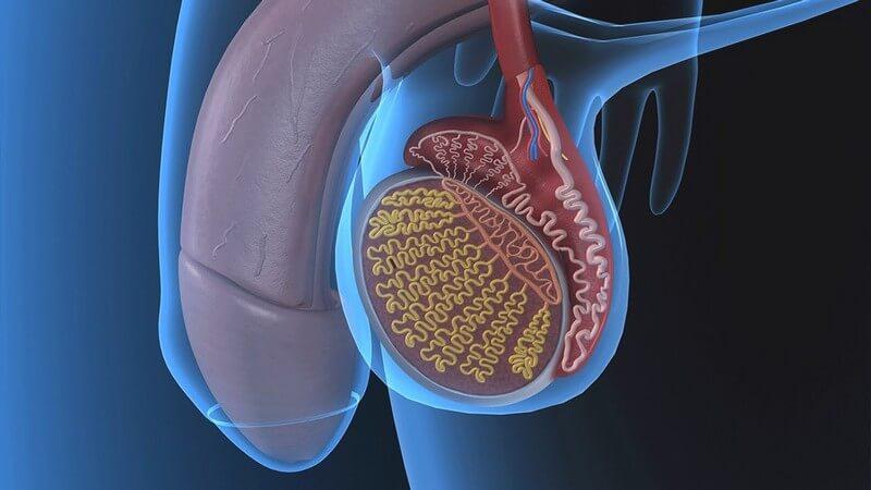 первые признаки рака яичка
